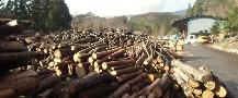 木材買取土場